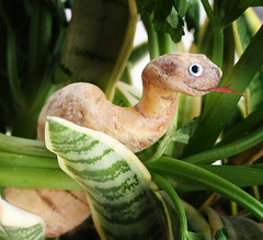 Cassava Snake (RR) Tags: food plant playing silly vegetables fun funny cobra with snake comida humor explore veggies serpent veggie root frontpage yucca anthropomorphic playingwithfood cassava aipim yuca serpiente mandioca serpente manioc cassave maniok casava antropomorfico brincandocomacomidablog