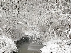 winter wonderland (kk7k) Tags: life wood old trip winter ohio usa white color cute art love ice nature water beautiful beauty look forest canon wow wonderful landscape geotagged fun happy countryside us interestingness cool nice woods scenery colorful stream flickr day top country best powershot explore frontpage loved thick winterwonderland 2012 2010 mar03 march03 feb26 2011 g9 explored 2013 frontpageexplore 6febg9 feb262010