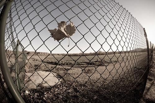 Prisionera del viento