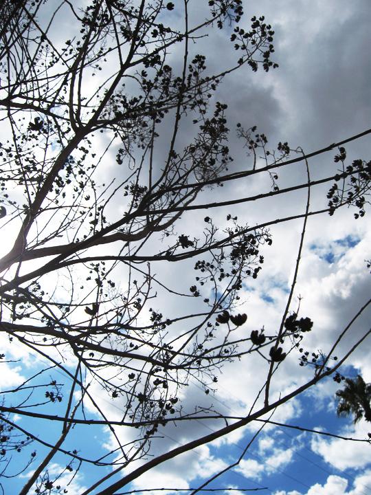 trees blooming spring