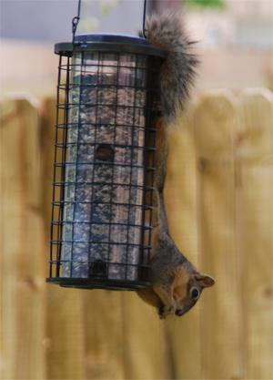 Think-Ill-steal-birdie-food
