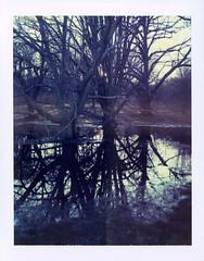 Polaroid 59 001 (Reid Haithcock) Tags: trees color film boston landscape polaroid 4x5 tungsten jamaicaplain largeformat arnoldarboretum instantfilm polaroid59 fujifp100c45 bummercity reidhaithcock polaroid64