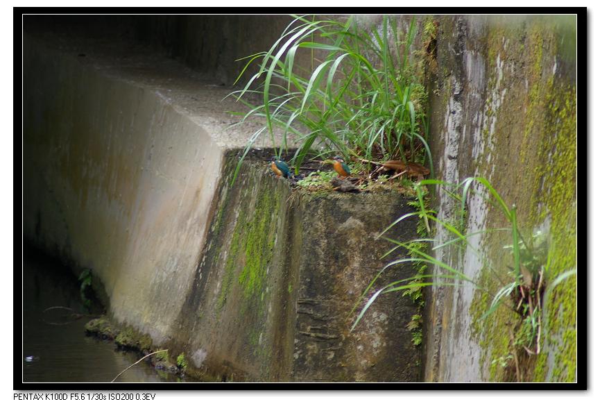 雨中遇小翠