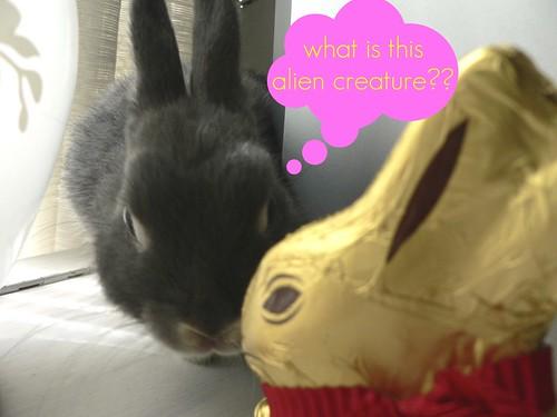 Binky investigates