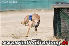 Welcher Greyhound?