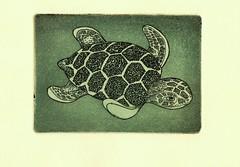 морская черепаха-морская 001 (tim.spb) Tags: офорт малые печатные формы открытки графика small plates etching aquafortis postcard ornament desigh sea turtle original