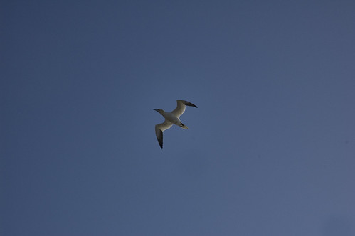 Gannet - single point