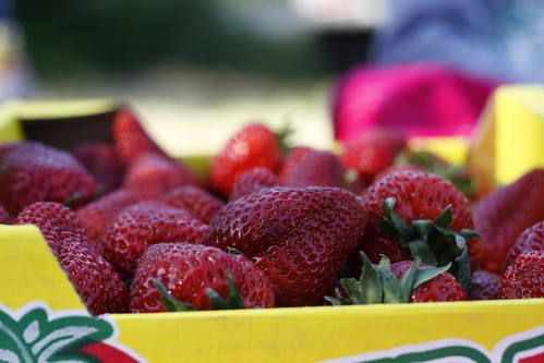 freshberries copy