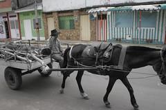 Fantasmas rurales 1 (Duvan Autodeter) Tags: horse animal rural caballo experimental retratos campo sombras llano fantasmas orinoco sabana zorra equino casanare blanoynegro pazdeariporo