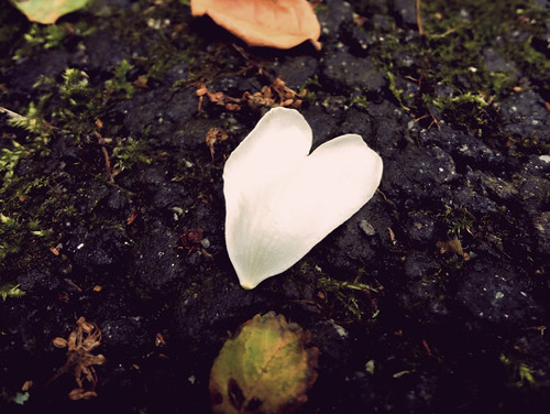 Heart Petal
