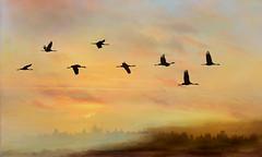 Spring is here, the Cranes arrives (BirgittaSjostedt.-computer problem again.) Tags: hornborgarsjön scene crane bird silhouette lake landscape dusk sunset sunrise sky flight fly spring springtime outdoor serene texture paint birgittasjostedt grusgrus commoncrane magicunicornverybest