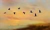 Spring is here, the Cranes arrives (BirgittaSjostedt) Tags: hornborgarsjön scene crane bird silhouette lake landscape dusk sunset sunrise sky flight fly spring springtime outdoor serene texture paint birgittasjostedt grusgrus commoncrane magicunicornverybest