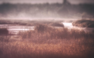 Mist on the Slough