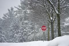 During a recent snow storm (Stickwork-Steve) Tags: winter storm snow snowstorm winterscene stop stopsign