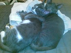 Hug (Dora X) Tags: cats kittens ursula meimei
