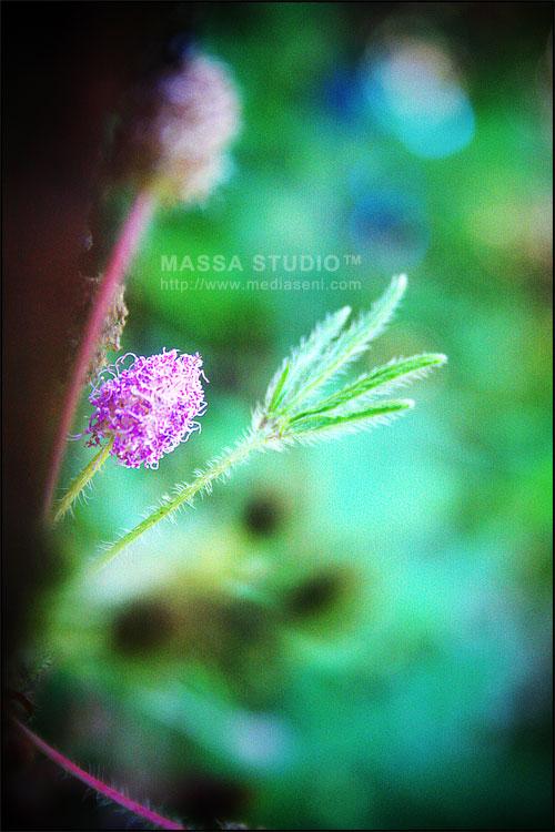 Bokeh Bunga Lagi