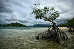 The Winner Stands Alone (mark laurence ong) Tags: seascape clouds mangrove 1022 uwa
