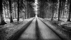 Along the Tree lined Path (EXPLORED) (Insight Imaging: John A Ryan Photography) Tags: road blackandwhite toronto ontario tree ir line bark trunk dufferin nikond300 ontariolutherlake wwwinsightimagingca johnaryanphotography