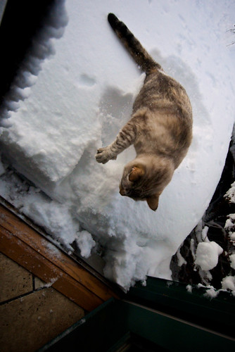 Step 3:  Throw Annoying Cat in Snow
