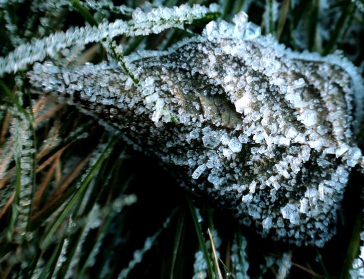 Hoar Frost Leaf