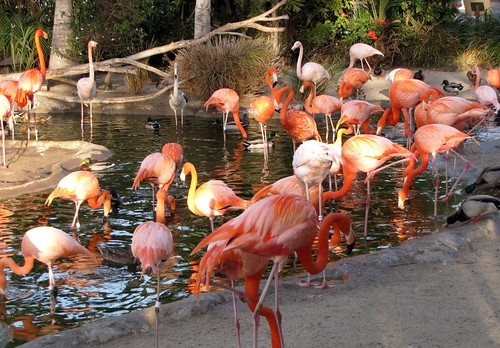 San Diego Zoo-10