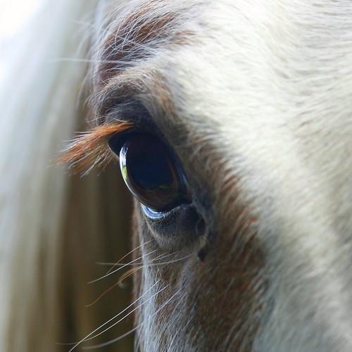 Horse eye by doug88888.