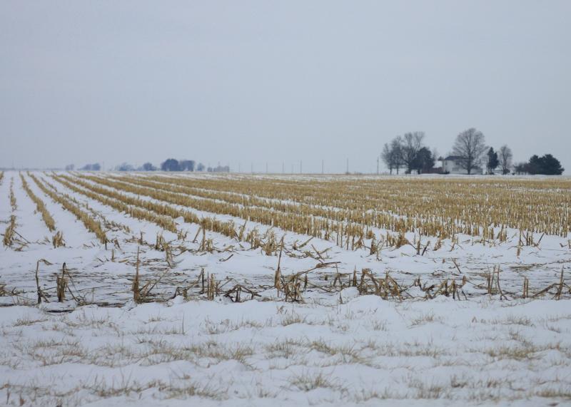 Snowy Field Stubble