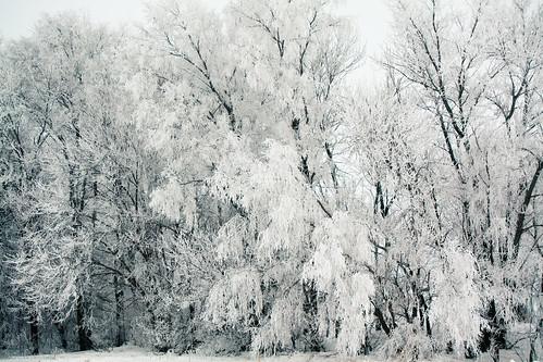 Spotless White