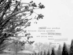 [029.365] Never Say Goodbye. (ChelRay) Tags: bw white snow black never tree fence quote going away peterpan saying 365 goodbye say because means picnik forgetting 2010yip