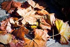 YBG-37 (ninsandnash) Tags: fall gardens canon garden san francisco yerba buena