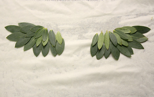 eucalyptus wings
