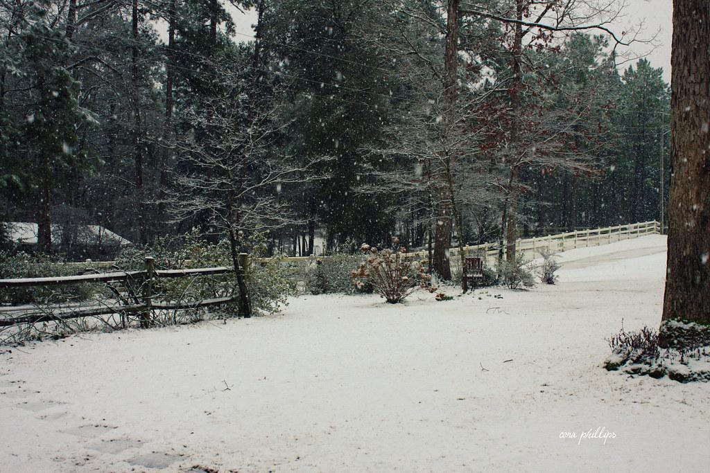 Snow Day 2-12-2010