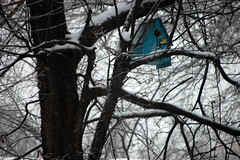 snowday.100211.09