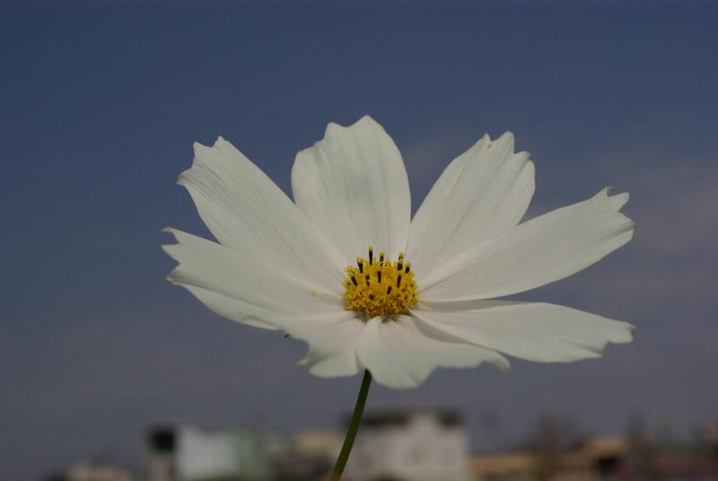 20100215農家花海(20張照片)