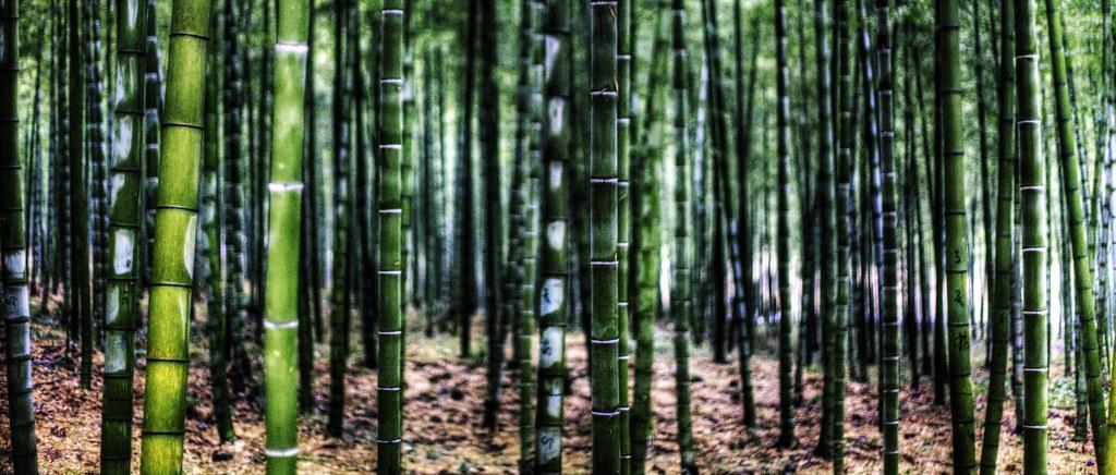 Bamboo.