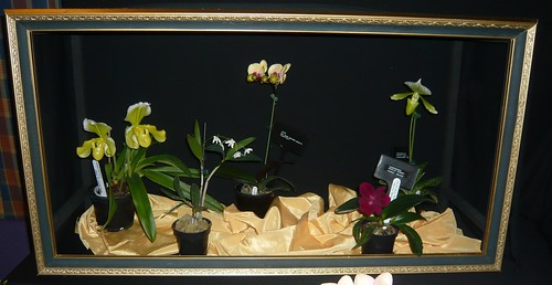 Orchid display case