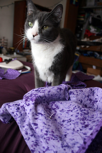 Day 80:  Cats and Sewing