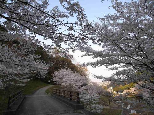 <桜>当麻寺奥の公園-05