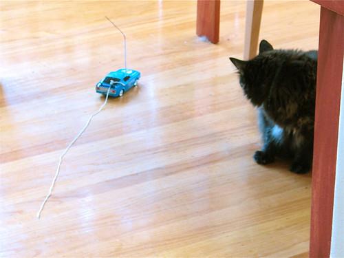 Cat String 6