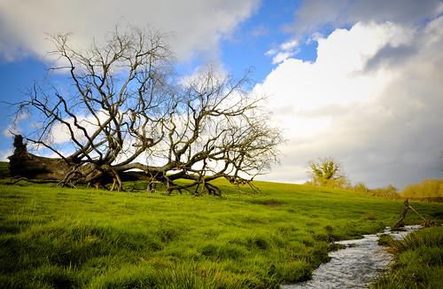 フリー画像| 自然風景| 樹木の風景| 草原の風景|        フリー素材|