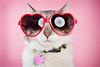 4350175628_5da92c5581 (Brunaloopes;*) Tags: pink love studio hearts valentine doo myfunnyvalentine catlove stuffonmycat alienbees 2470 heartsunglasses beautydish 5dii catwithsunglasses
