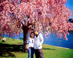 I'll die in your arms (Dr. RawheaD) Tags: pink people flower river cherry spring fuji kodak charles velvia sakura 50 e6 f25 graflex speedgraphic pacemaker selfdevelop aeroektar 178mm