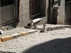 Street Cats - Beyoğlu, Istanbul, Turkey