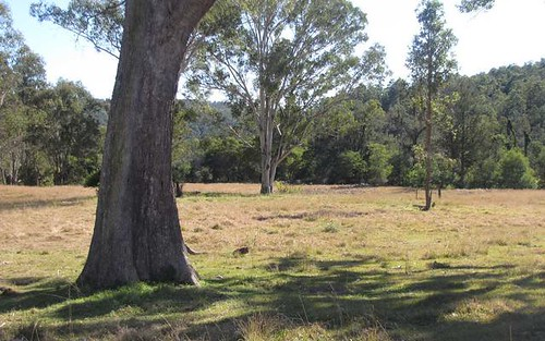 Lot 51 Deep Creek Road, Baryulgil NSW 2460