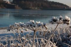 Untreusee (magicdeu1) Tags: eiszeit eis untreusee frost dauerfrost see zugefroren sonnenaufgang spiegel spiegelung hof bayern wasser blume eiskristalle kristalle flugzeuge