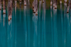 A blue mystery (takay) Tags: blue lake japan mystery forest landscape pond hokkaido teal  biei beautifulscenery  takay