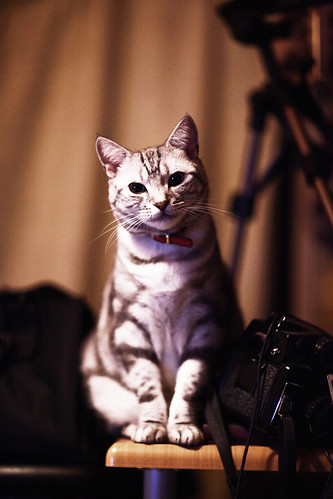 dollcat & Mamiya645