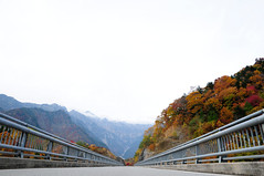 20091025 Kita-Alps Bridge 1 (BONGURI) Tags: bridge nikon autumncolors  takayama  gifu  coloredleaves d300   okuhida    kitaaplsbridge