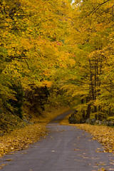 Country Road Take Me Home (eophir photography) Tags: trees fall nature yellow canon john landscape eos newjersey colorful seasons landscaping nj denver foliage alpine mellowyellow jersey canoneos shady soe countryroad englewood palisades tenafly fallenleaves roadway naturescape colorfulautumn palisadesinterstatepark bergencounty verticallandscape 40d henryhudsondrive shadyroad shieldofexcellence autumnlandscape canon40d alpineboatbasin