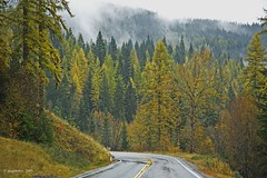 Once Upon A Time On A Rainy - - (jimgspokane) Tags: autumn fall rain larch tamarack mtspokane otw onlythebestare